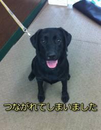 エアコンクリーニング現場の黒犬